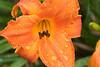 Flowers_MG_4414
