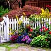 Flower Garden - 72
