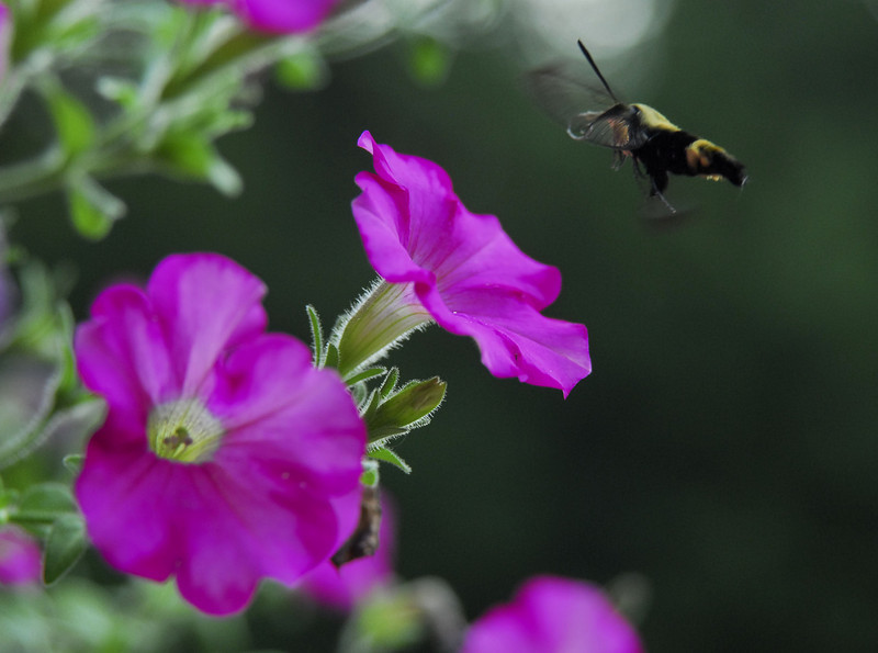 butterbug landing edit 1