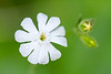 flower smugmug (12 of 26)