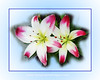 #A Nature Photo, Lilies, Rictographs Images; Photos & Art