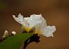 2565 - Flower