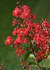 1579 - Flowers