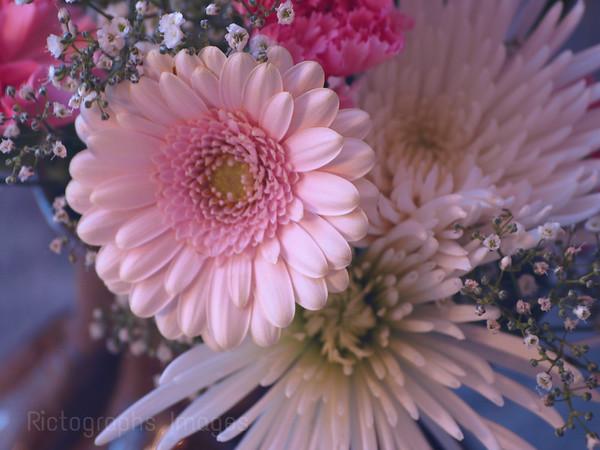 Planten Flowers