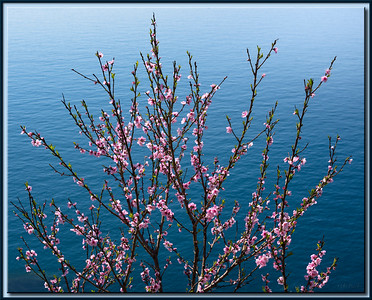 Frühlingsblüte am Mittelmeer