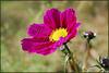 purple flower 178