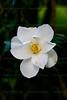 CRay-Flowers-6890