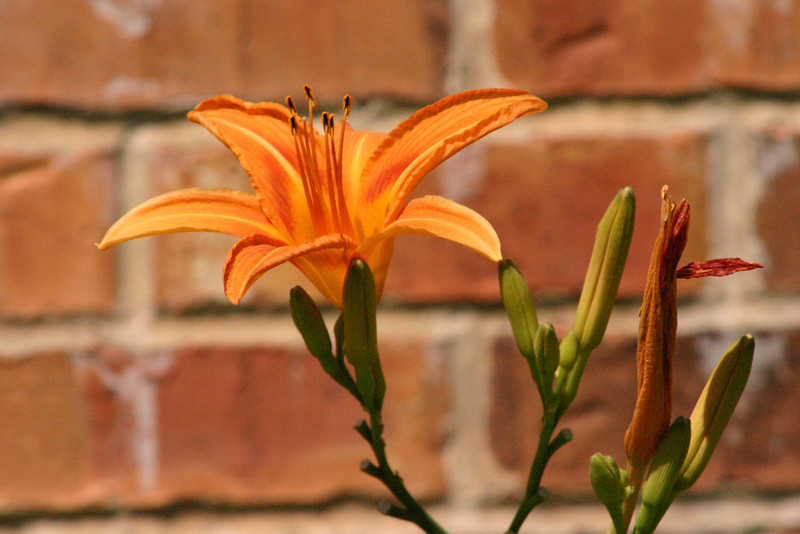Orange One of my daughters spotted this single flower sprouting outside of church last Sunday, and insisted that I take a picture of it before we left