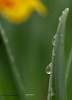 Reflections in Dew
