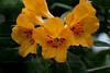 CRay-Flowers-0705