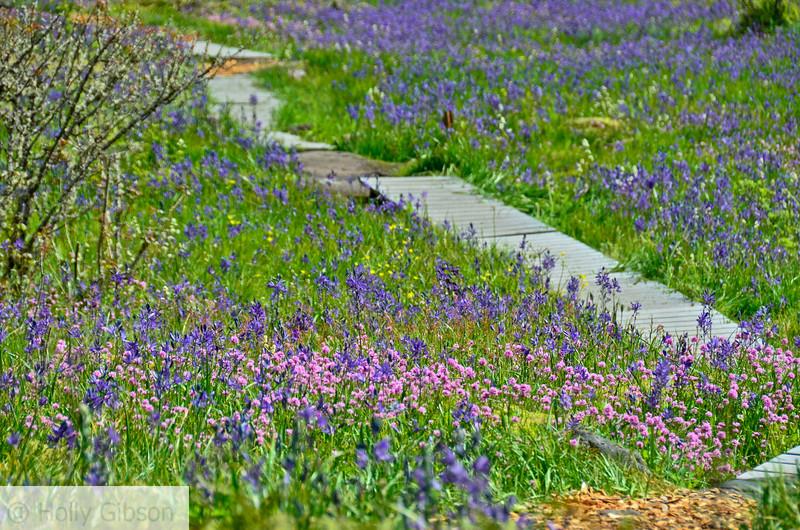 Camassia Nature Area - West Linn Oregon - 182