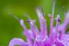 flower smugmug (21 of 26)