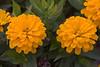 Flowers_MG_5357 copy