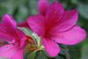 CRay-Flowers-0704