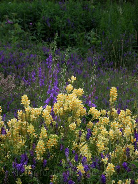 Wild Wildflowers