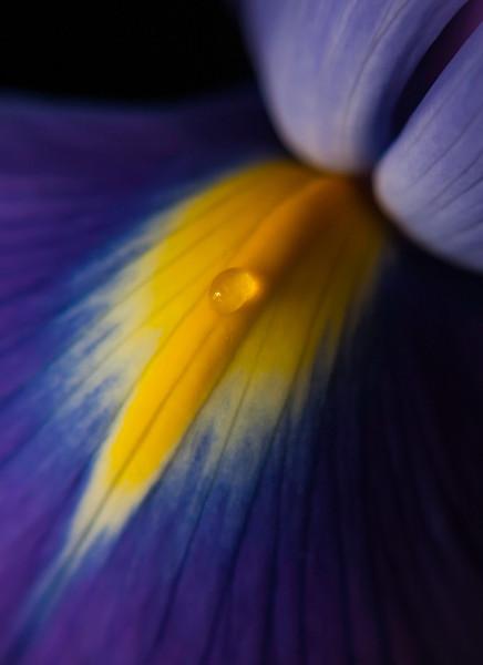 "<font color=""#e9efb7"">Purple Iris"