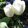 Duke Gardens- Easter 2009 171