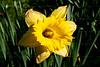 CRay-Flowers-0040