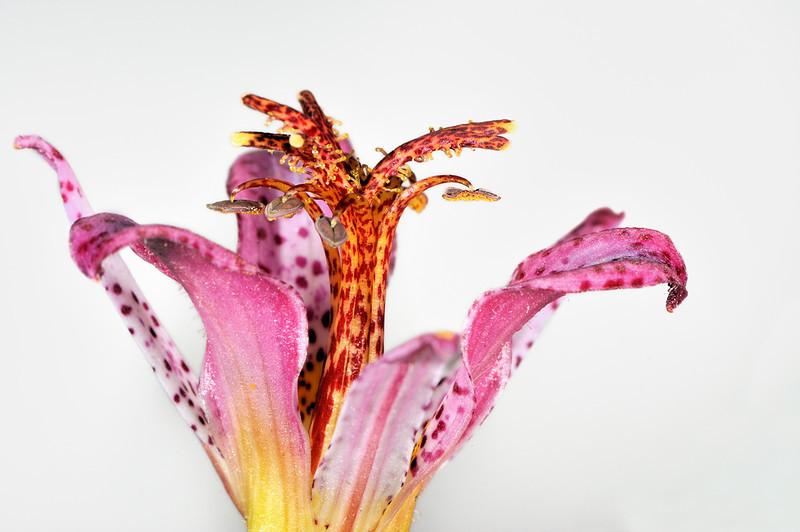 Flower.<br /> Sydney, Australia.