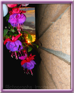The Setting Sun & Fushia Flowers