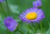flower smugmug (8 of 26)