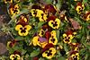 CRay-Flowers-0806