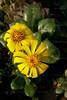 CRay-Flowers-0646