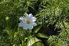 Flower_MG_4081