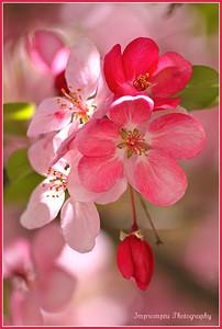 April 5, 2012. More blossoms.