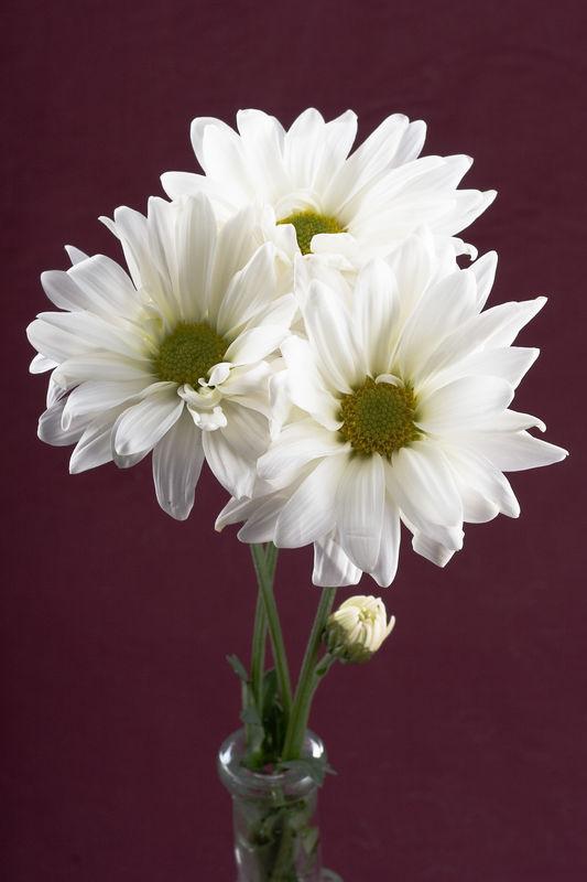 Flower_0162