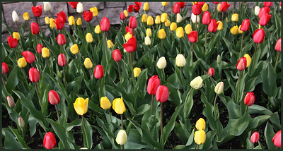 Red, Yellow and White...Oh My!   0167