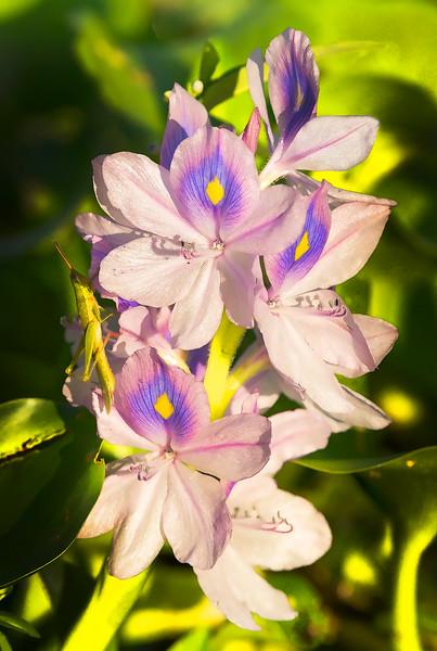 _DLS1006 flowers