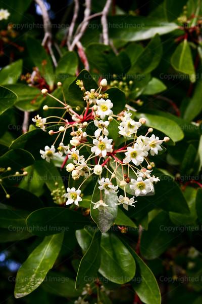 CRay-Flowers-6893