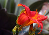 1361 flower 5X7