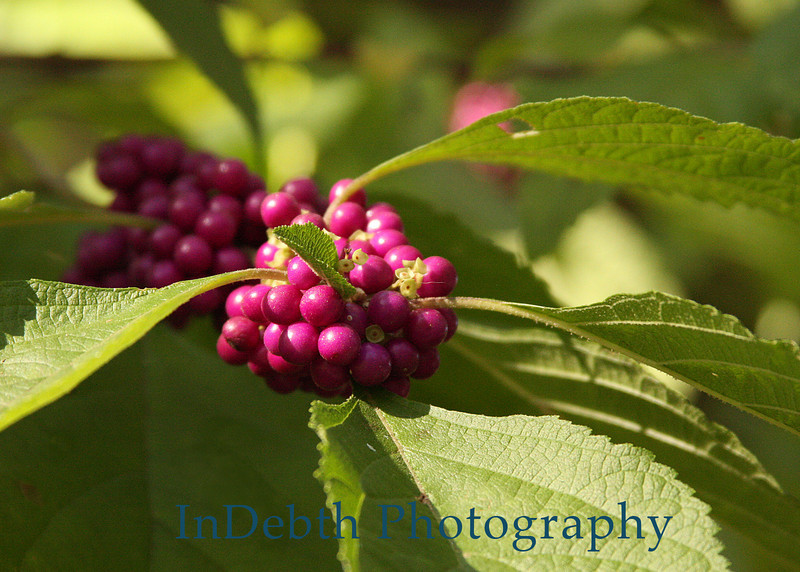 0025 - Berries