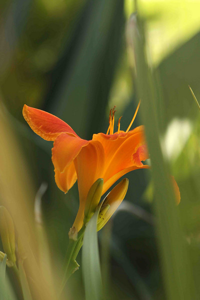 2042 - Flower