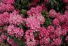 CRay-Flowers-0815
