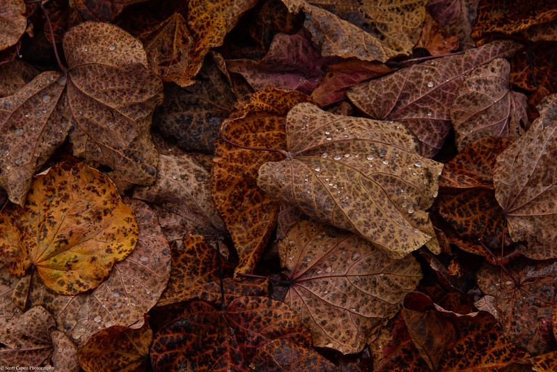 Raindrops on Fallen Leaves