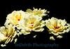 4116 - Roses Flowers