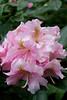 CRay-Flowers-0719