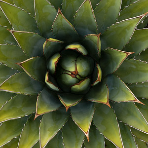 Agave Square