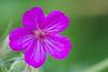 flower smugmug (19 of 26)