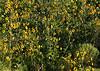 4149 - Wild Flowers