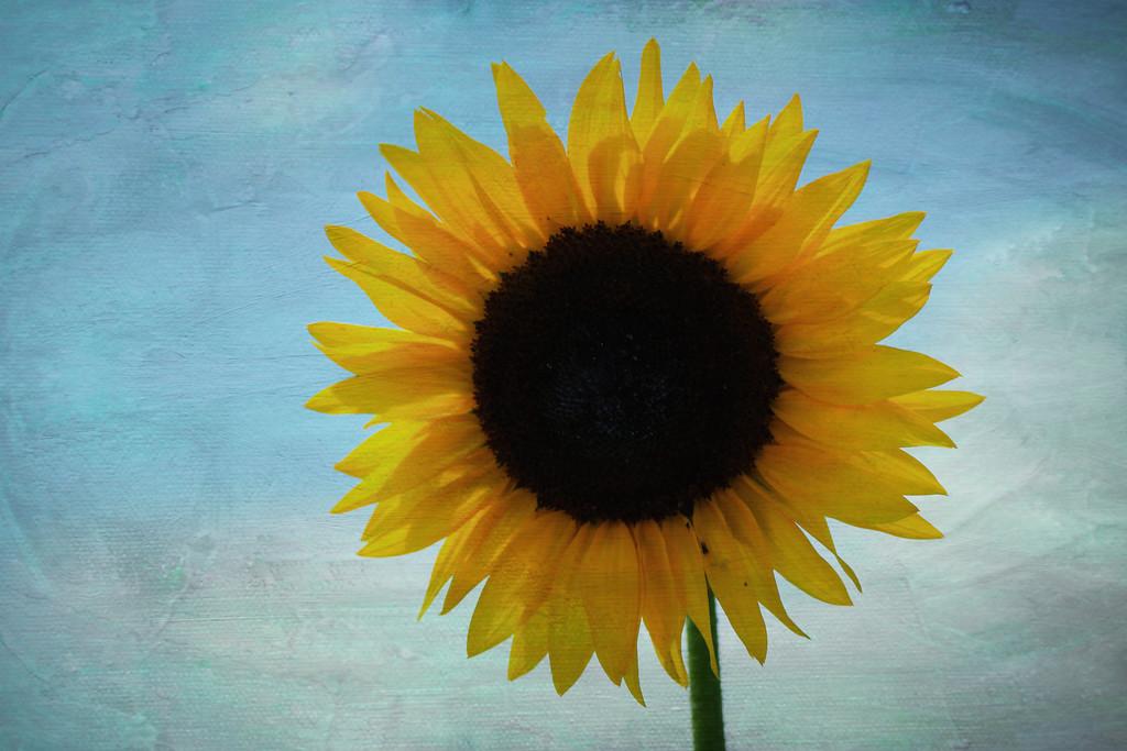 sunflower on paint