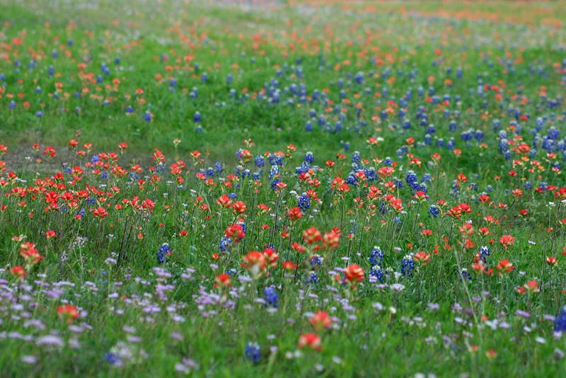 5707 - Wild Flowers