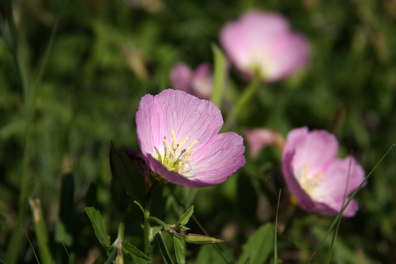 1880 - Flowers