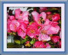 Pink Apple Blossoms & Busy Bee,  Ric Evoy Rictographs images