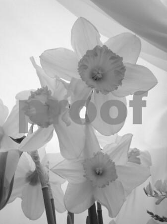 Flowers & Gardens Copyrt 2013 m burgess