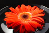 CRay-Flowers-00002793