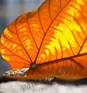 Leaf orange 2064